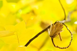 Yellow by lstolzar