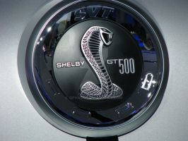 2010 Shelby GT500 - emblem by Qphacs