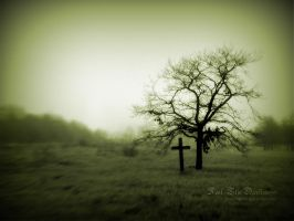Lonely grave and a dead tree by taphosarts