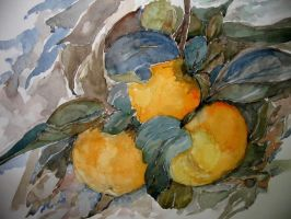 Persimmons by lapoall