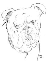 Boxer Dog by norrit07