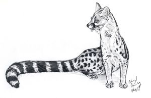Genet sketch by silvercrossfox