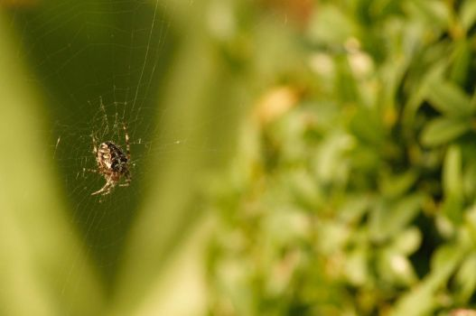 Tiny spider on the web! by Fjupt