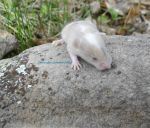 Mossy rock mouse baby by MaguschildCloud