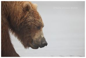 Grizzly Profile by Nate-Zeman