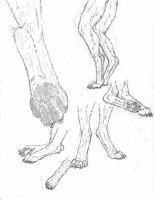Anthro Wolf Feet Sketches by RussellTuller
