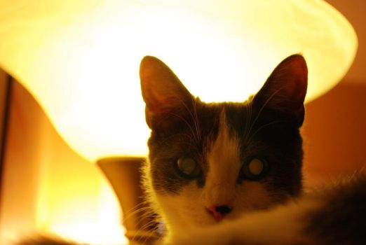French Cat by sandie-39
