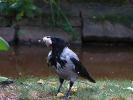 365.032: Feast for a Crow by linderel