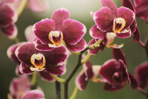 orchidee 1 by marob0501