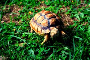 Baby Tortoise by MaryahDPhotography