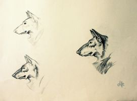 Dog sketches 2 by LeeWhiro
