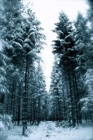 snowforest by Jared1