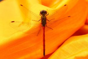Hitchhiker in my canoe by minamiko