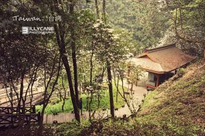 Alishan Scenic National Park by Yingz