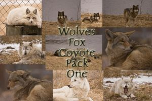 Wolves Fox Coyote Pack One by Seductive-Stock