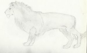 Lion by Ctlna0199