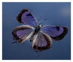 Drowned Butterfly1 by angelbabiau