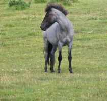 Roan stock 1 by The-strawberry-tree