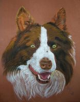 Collie Brown by resistanceispointles