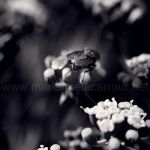Mouche by Aiae
