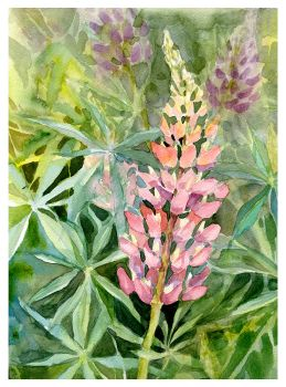 Lupine by XViolacea