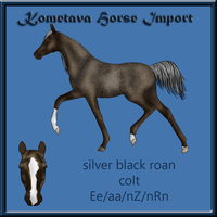 Kometava Horse Import #14 SOLD by Zephyrra