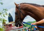 Horse Racing 608 by JullelinPhotography