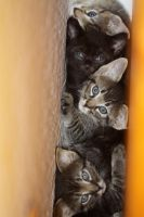 A Wall of Kittens by BelieveInAlways