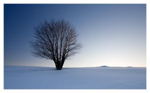 serenity by one-shot-below