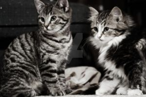 Kittens by BookOfMyLife