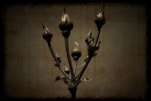 in line buds by awjay