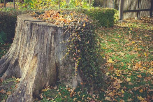 Autumn Stump by CindysArt-Stock
