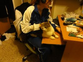 cats and tecnology 2 by Tedah