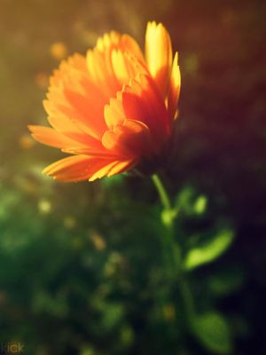 Sunny flower by ~SawyerAFK