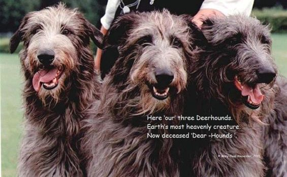 Deerhounds by Mary-Jose