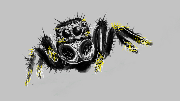 jumping spider by somnalus