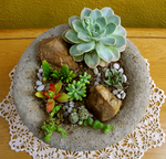 Succulents Stock 1 by Rhabwar-Troll-stock