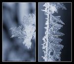 Ice Crystals by littlemewhatever