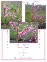 Peaches Flowers Pack by Ivette-Stock