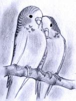Budgies sketch by MondoArt