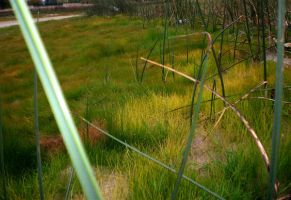 Grass 3 by Pistol-Whipped-Sar