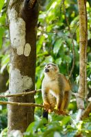 Squirrel Monkey by CBasco