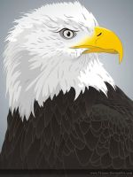 Eagle by thuran