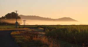 Morning mist on the canefields by CouchyCreature