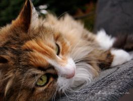 Bent Whiskers by alluring
