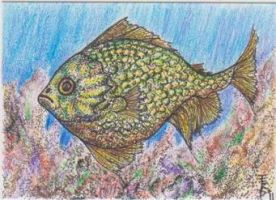 Tropic Jewel Fish by squidink
