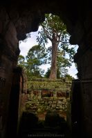 A tree in the temple by drewhoshkiw