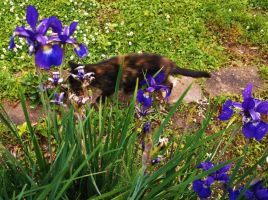 Sophie's a blur scurrying by irises in the rain by MystMoonstruck