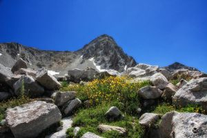 Flowers and the Pierferhorn by mjohanson