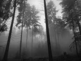 Foggy Forest by hayurikokoro